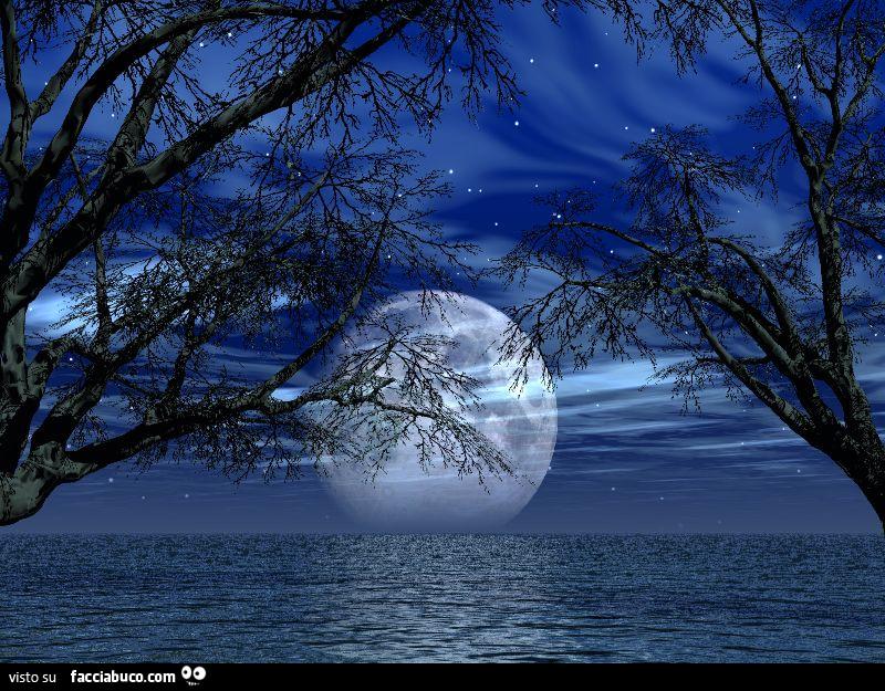 Luna Sul Mare Tra Gli Alberi Facciabucocom