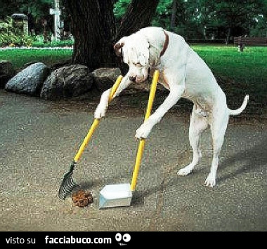 Cane raccoglie la sua cacca con scopa e paletta for Arte del riciclo fai da te