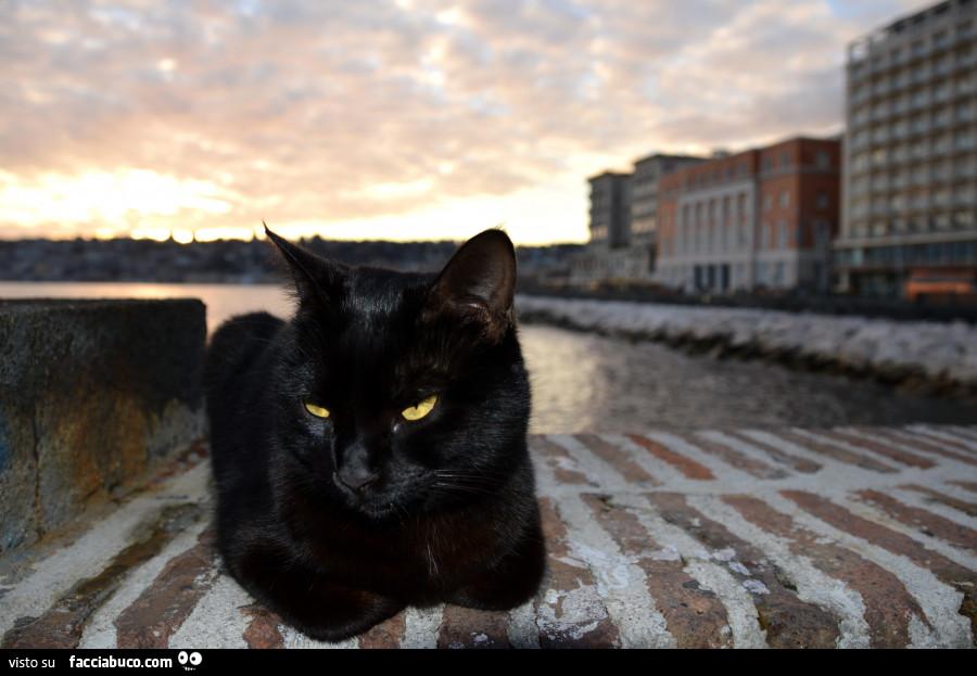 Nero micio con nero cazzo