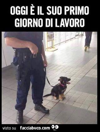 Cucciolo Di Cane Pastore Tedesco Poliziotto Oggi è Il Suo Primo