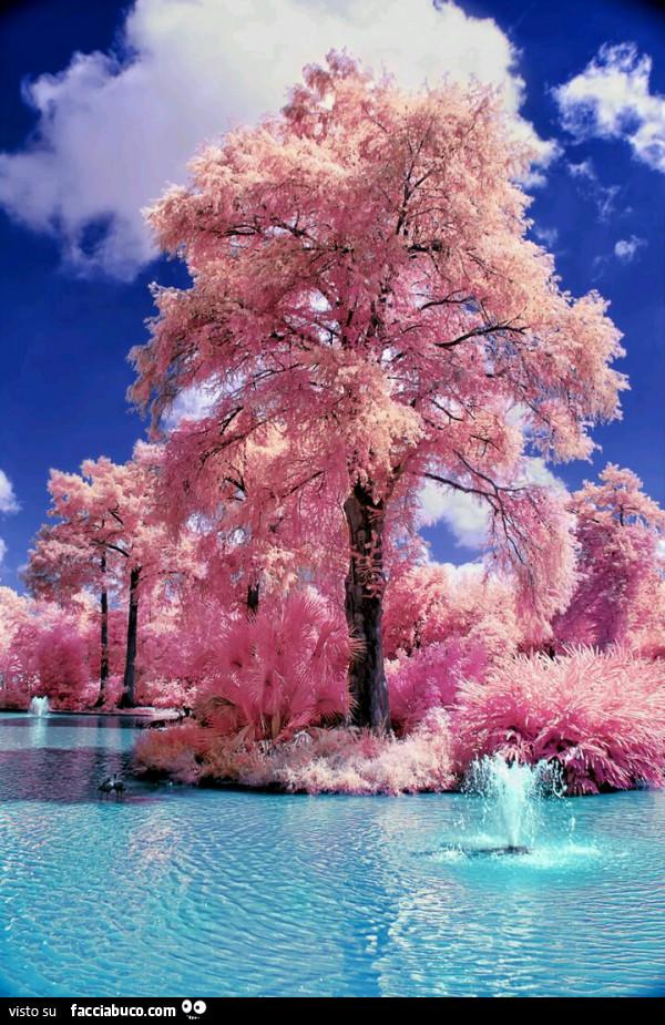 foto di alberi fioriti